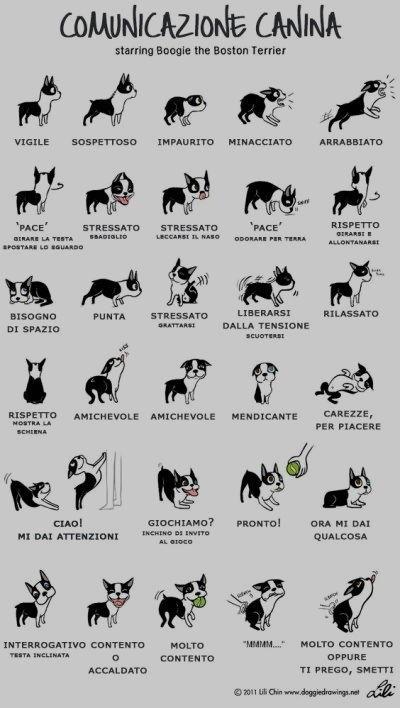 i messaggi del cane