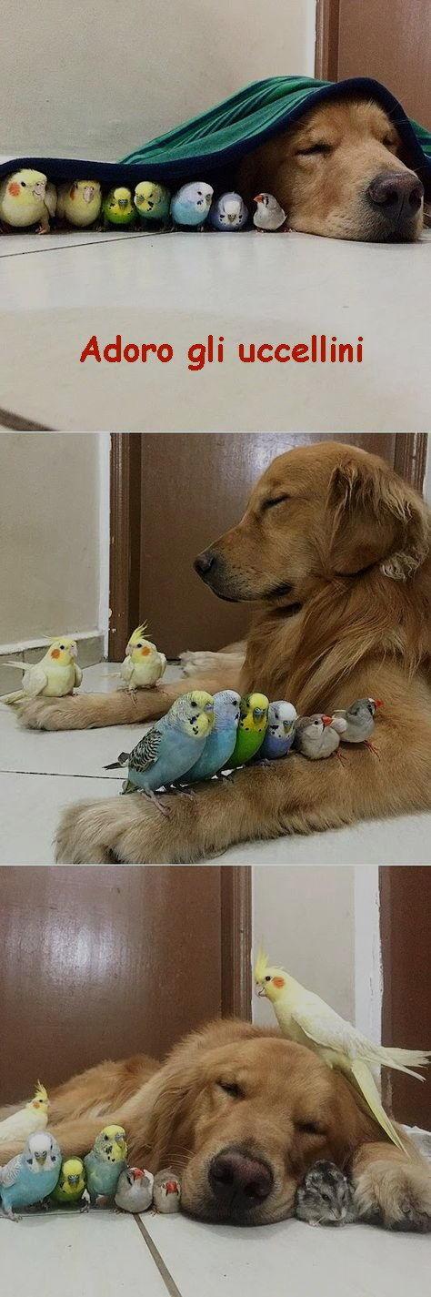 adoro gli uccellini