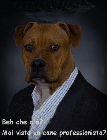 cane professionista