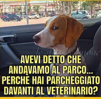 cani dal veterinario