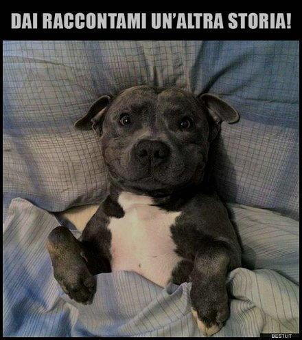 cani raccontami un altra storia
