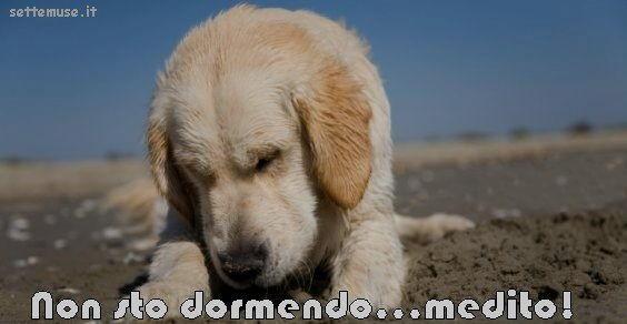 cani non sto dormendo medito