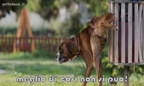 cani meglio di cosi