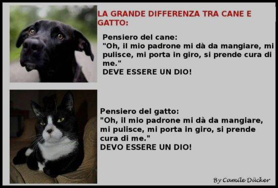 cani differenze cane gatto
