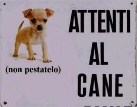 cani attenti al cane