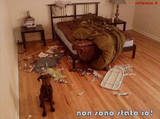cani non sono stato io