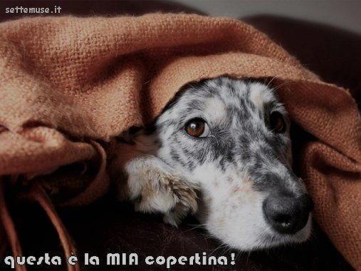cani questa è la mia coperta