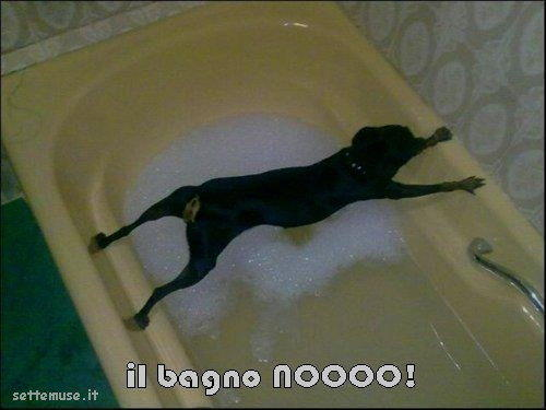 cani il bagno nooo