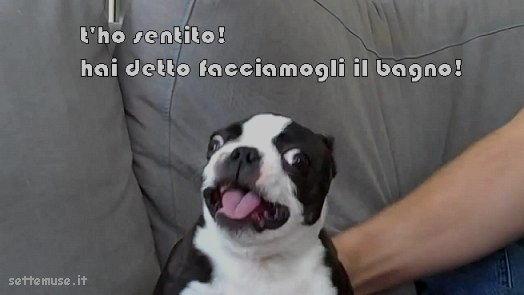 cani hai detto bagnetto