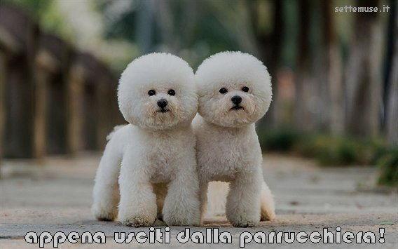 cani usciti dalla parrucchiera