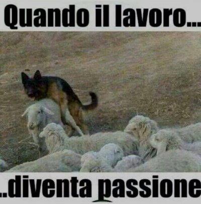 cani quando lavoro diventa passione