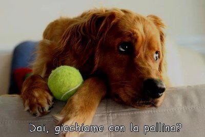 dai giochiamo con la pallina