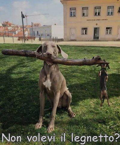 non era questo il legnetto che volevi
