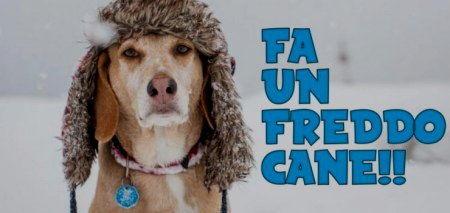 oggi freddo cane