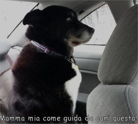 mamma mia come guida da cani questo