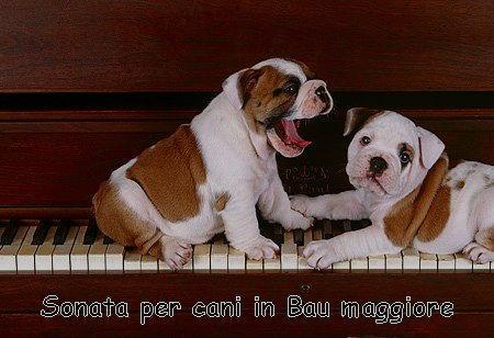 sonata per cani in bau maggiore