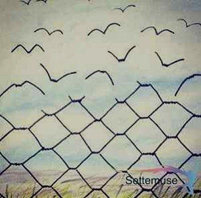 Vignetta liberta