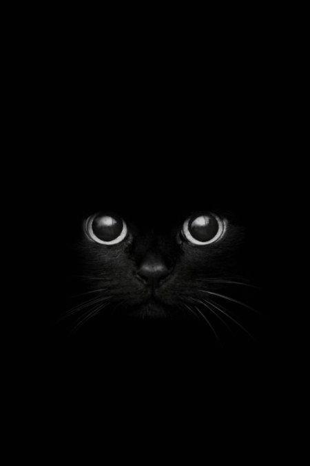 gatto per sfondo cell