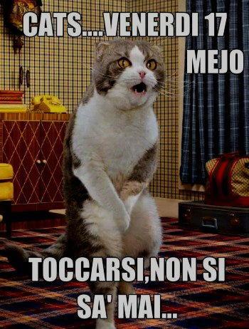 gatto venerdi 17