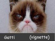 Vignette e meme sui gatti