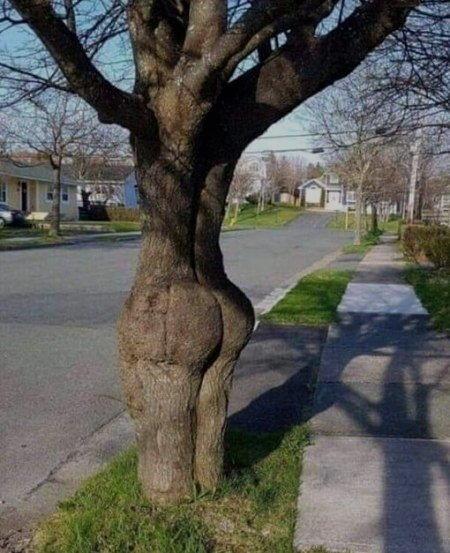 che tronco sexy