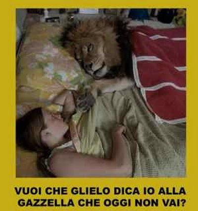 gazzella e leone