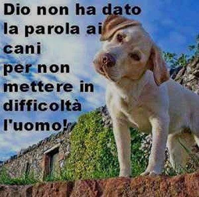 parola al cane