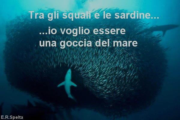 tra squali e sardine