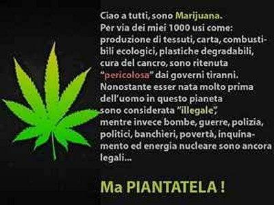 Vignetta marijuana