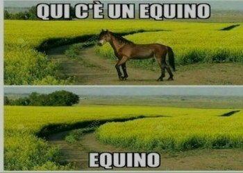 qui un equino