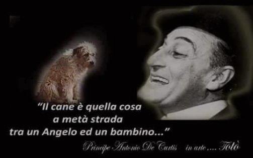 Toto il cane