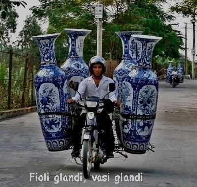 fioli grandi vasi glandi
