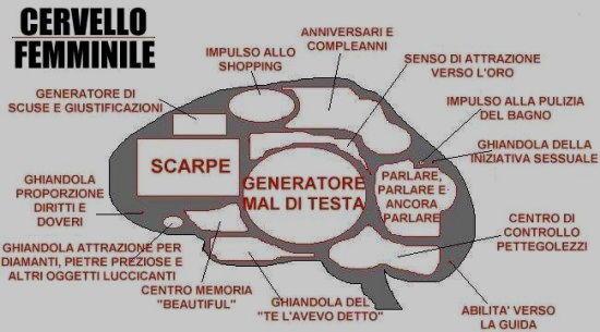 Vignetta cervello femminile