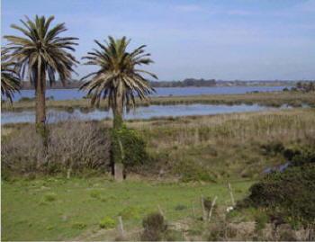 Sabaudia - Lago di Fogliano