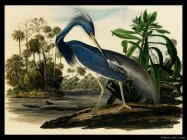 Audubon John James