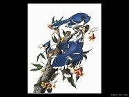 Audubon John James 004