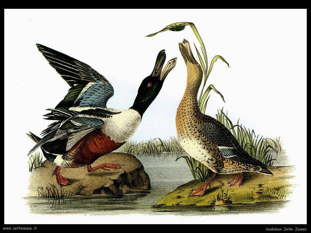 Audubon John James 009