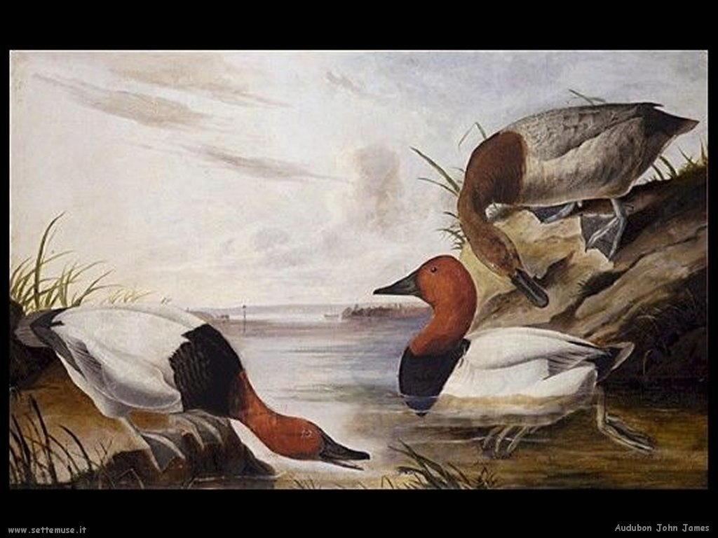 Audubon John James 010