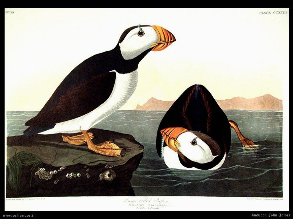 Audubon John James 011