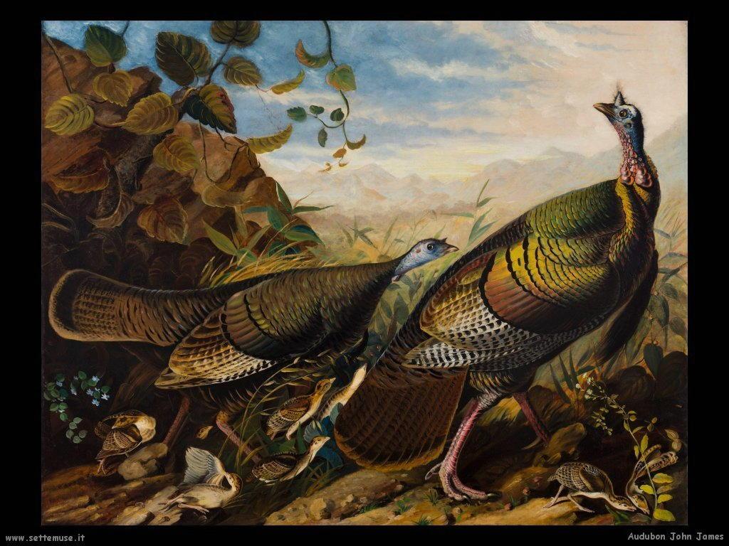 Audubon John James 013