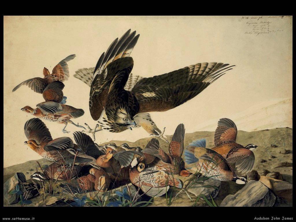 Audubon John James 014