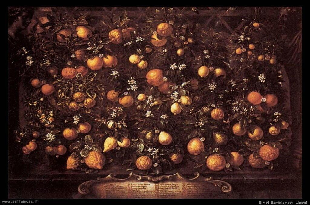 bimbi_bartolomeo_503_citrus