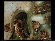 Studi della volpe