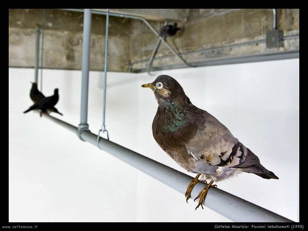 11 piccioni imbalsamati 1998