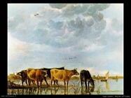 Mucche nell'acqua