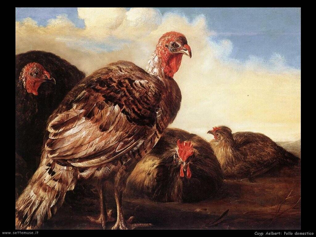 Pollo domestico