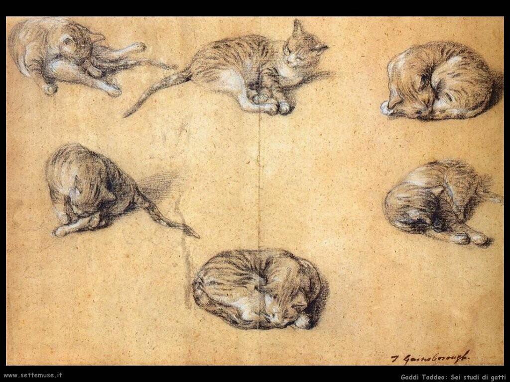 gainsborough thomas Sei studi di un gatto