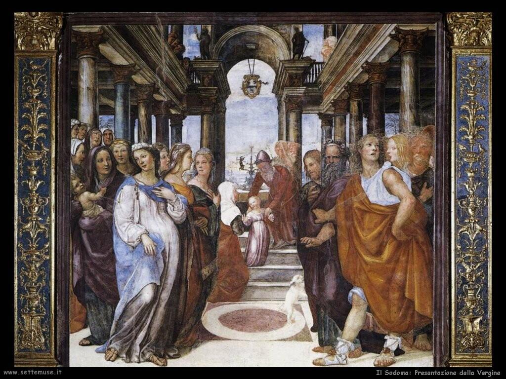 il sodoma   Presentazione della Vergine
