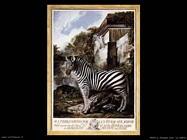 paret y alcazar luis   Zebra