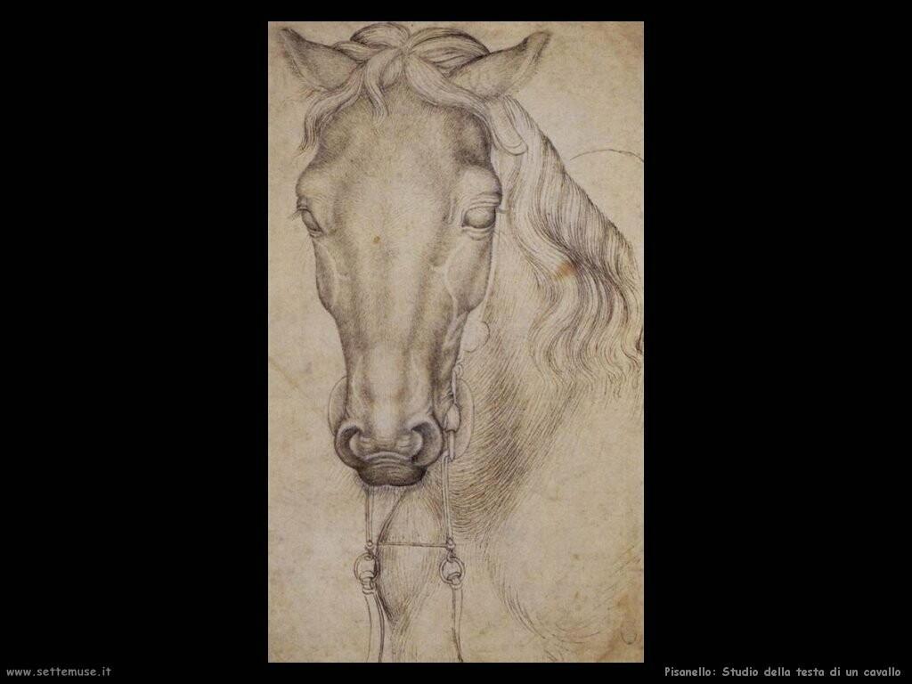 pisanello  Studio della testa di un cavallo